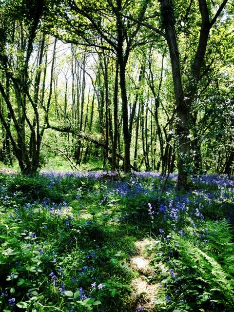 bluebell pic 2