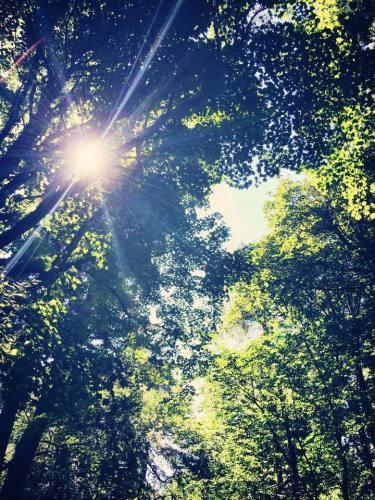 oak sunlight