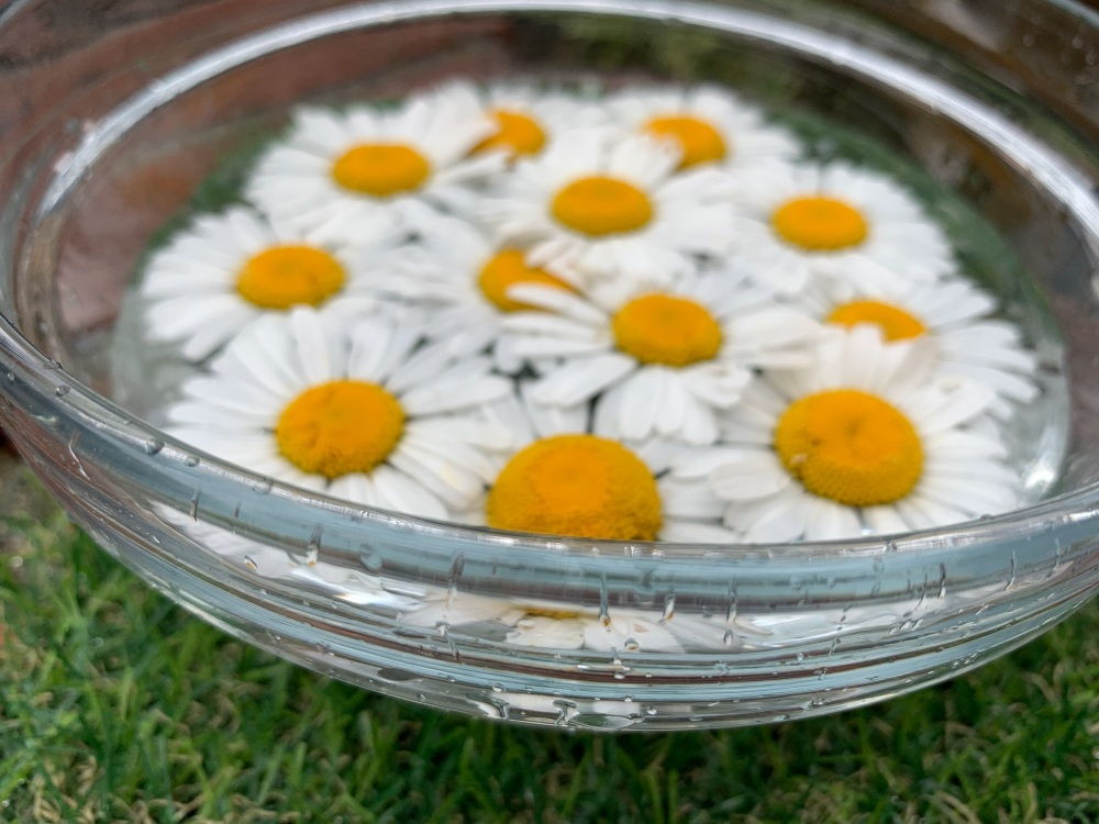 Daisy Flower Essence
