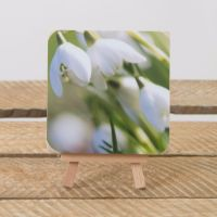 "4x4"" Birch Block - snowdrops"