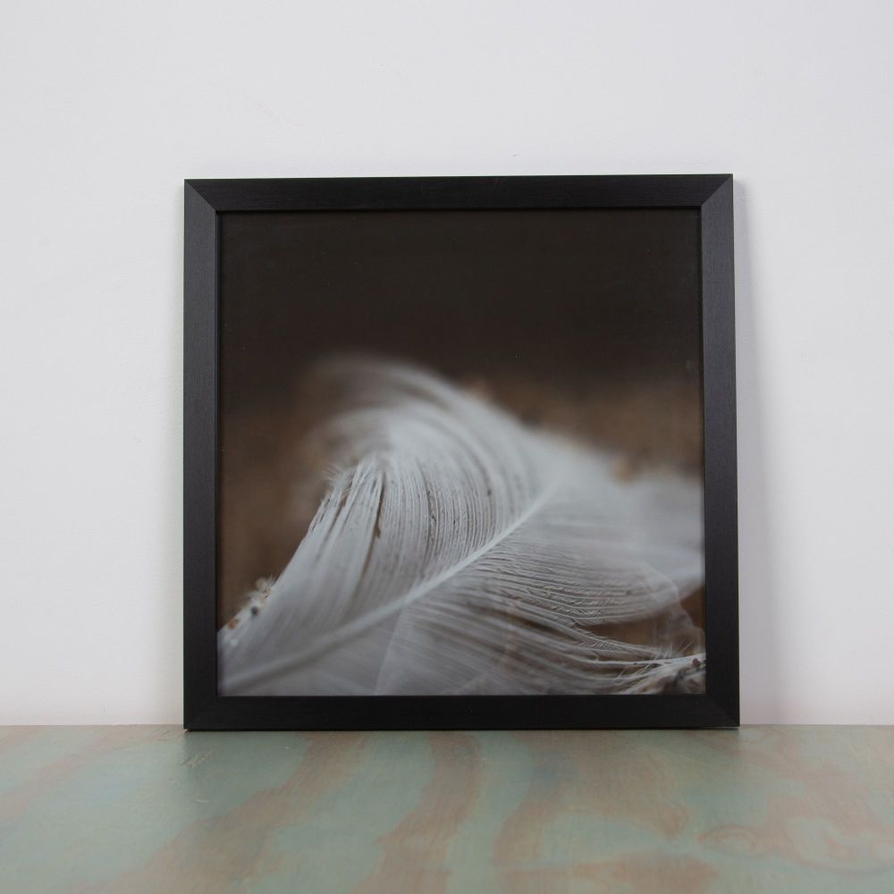 Feather picture by Sarah Loveland