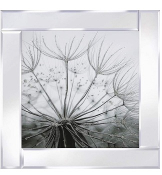 Mirror framed art print Dandelion Black & White
