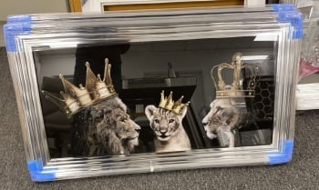Lion, Queen Lioness & Cub   in a chrome stepped  framed 114cm x 64cm