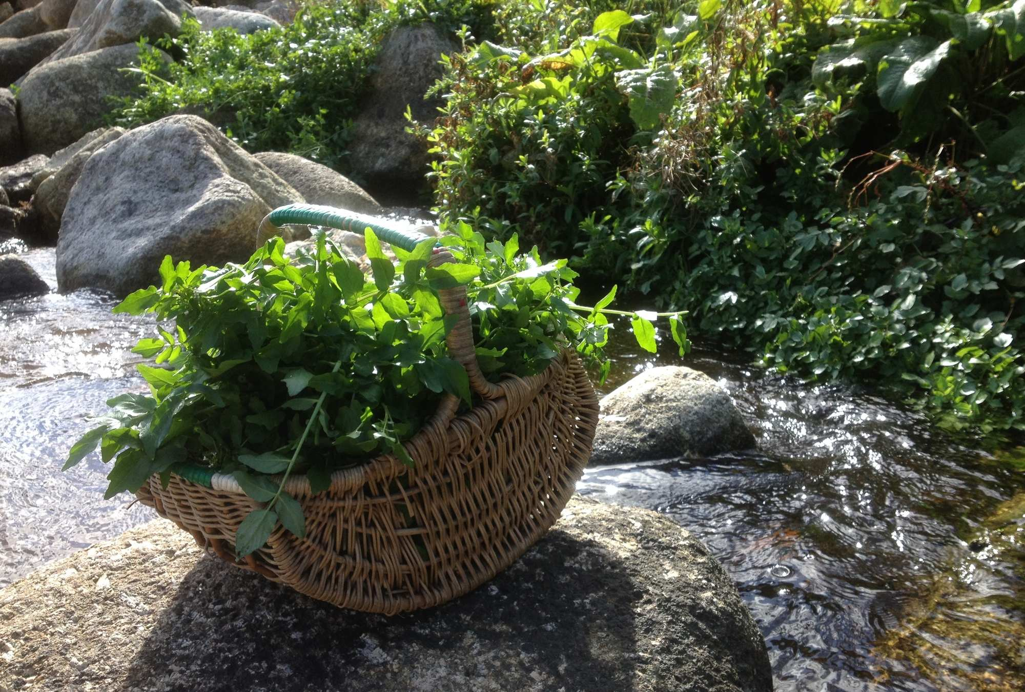 watercress cornwall 1