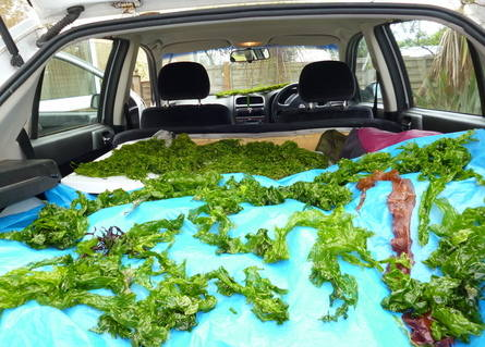 seaweed car