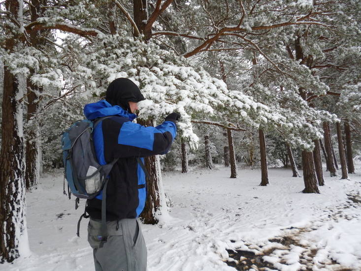 Pine snow