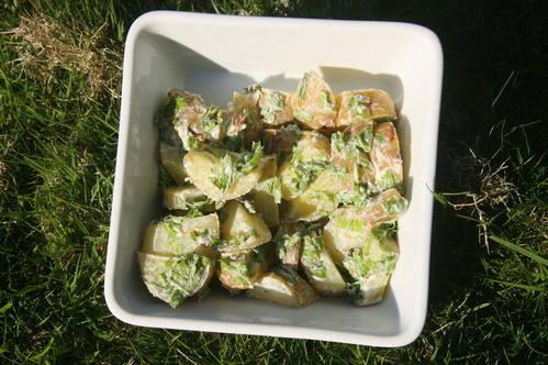 beech pot salad