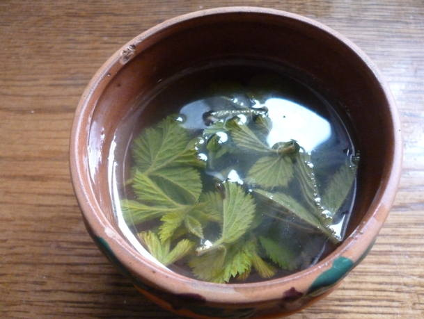 bramble leaf tea