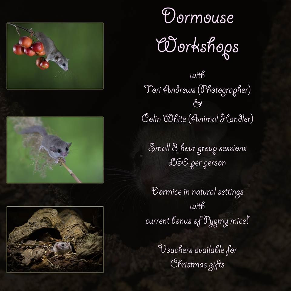 Dormouseworkshop