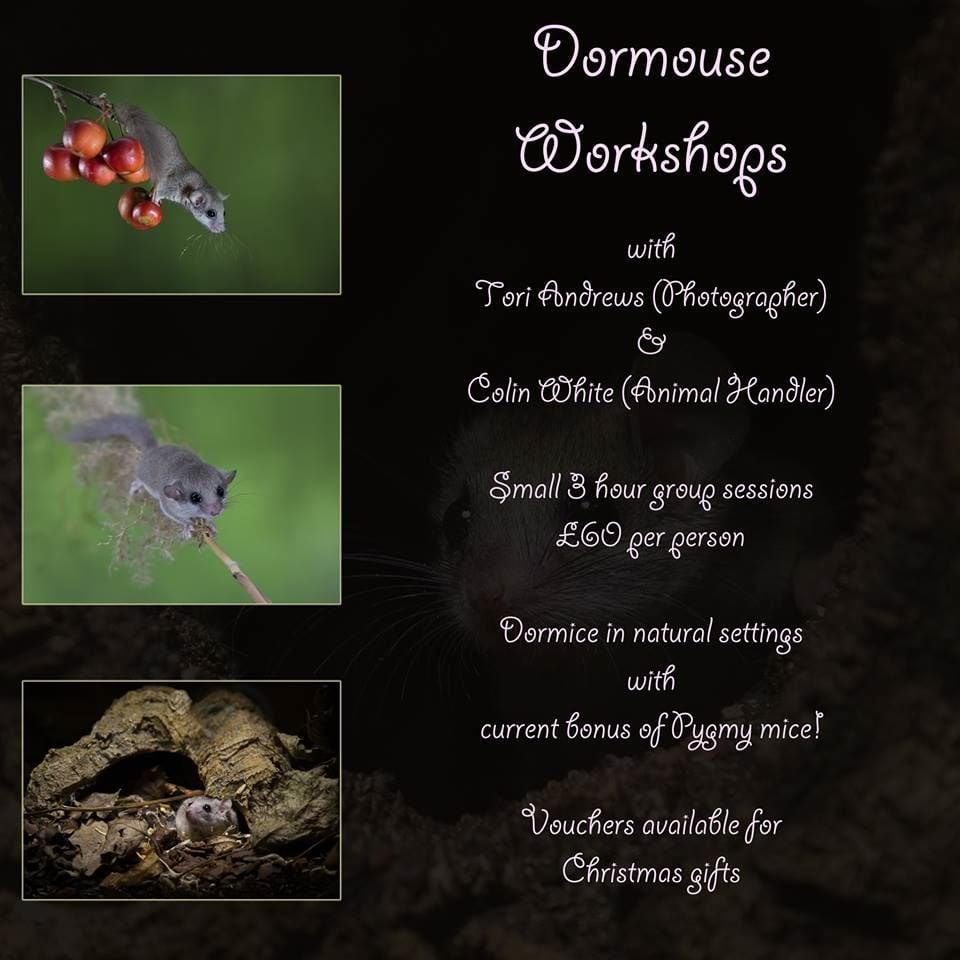 Dormouseworkshop