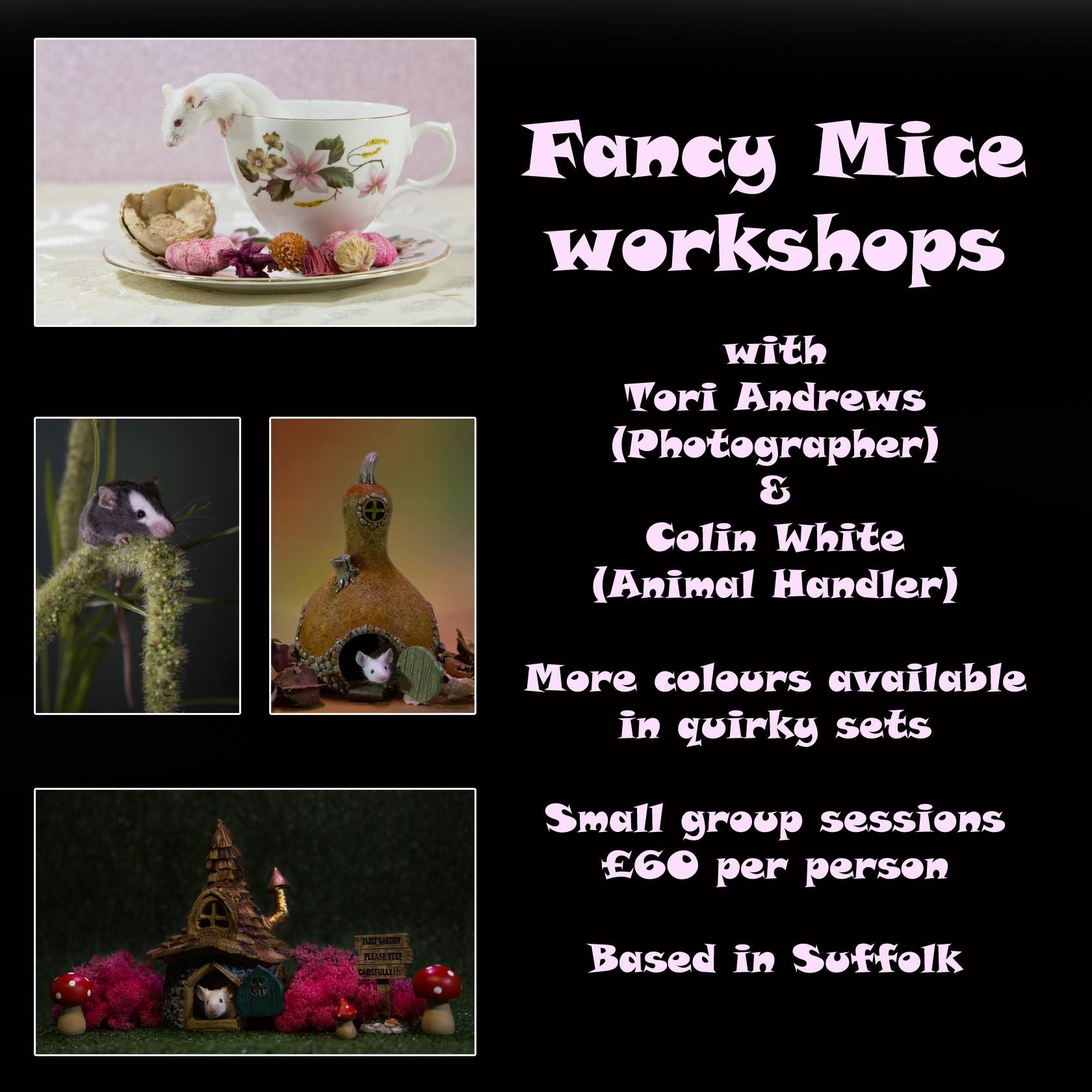 Fancy mouse workshop