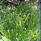 Fibreoptic plant