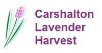 Carshalton Lavender Harvest