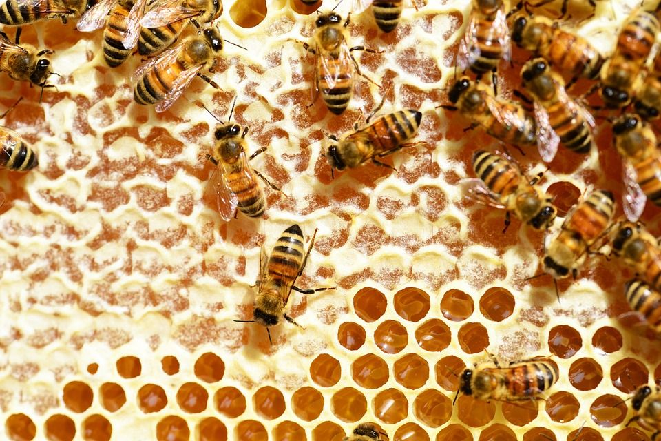 bees-345628_960_720