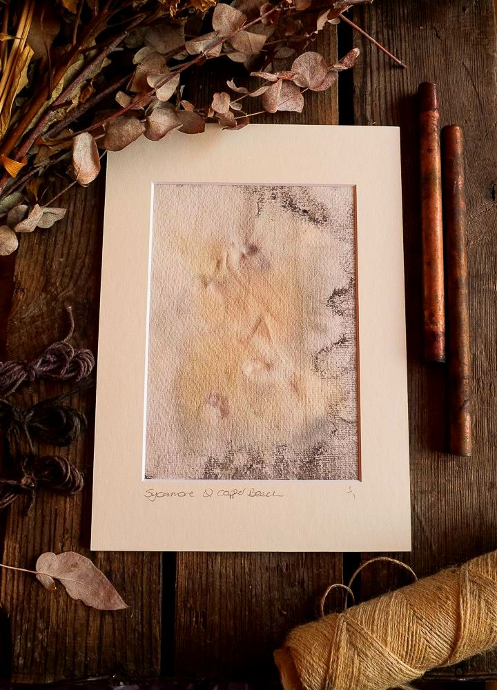 Sycamore and Copper Beech Leaf  print on handmade paper