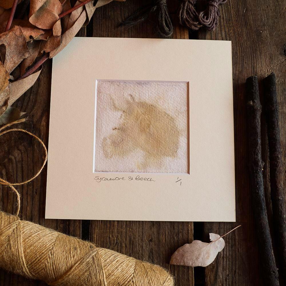 Sycamore & Beech  print on handmade paper