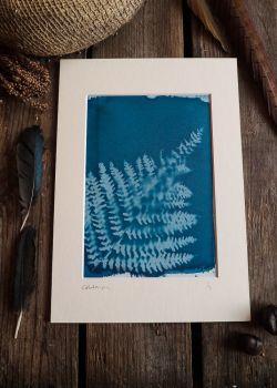 Fern Cyanotype original print in A4 Mount