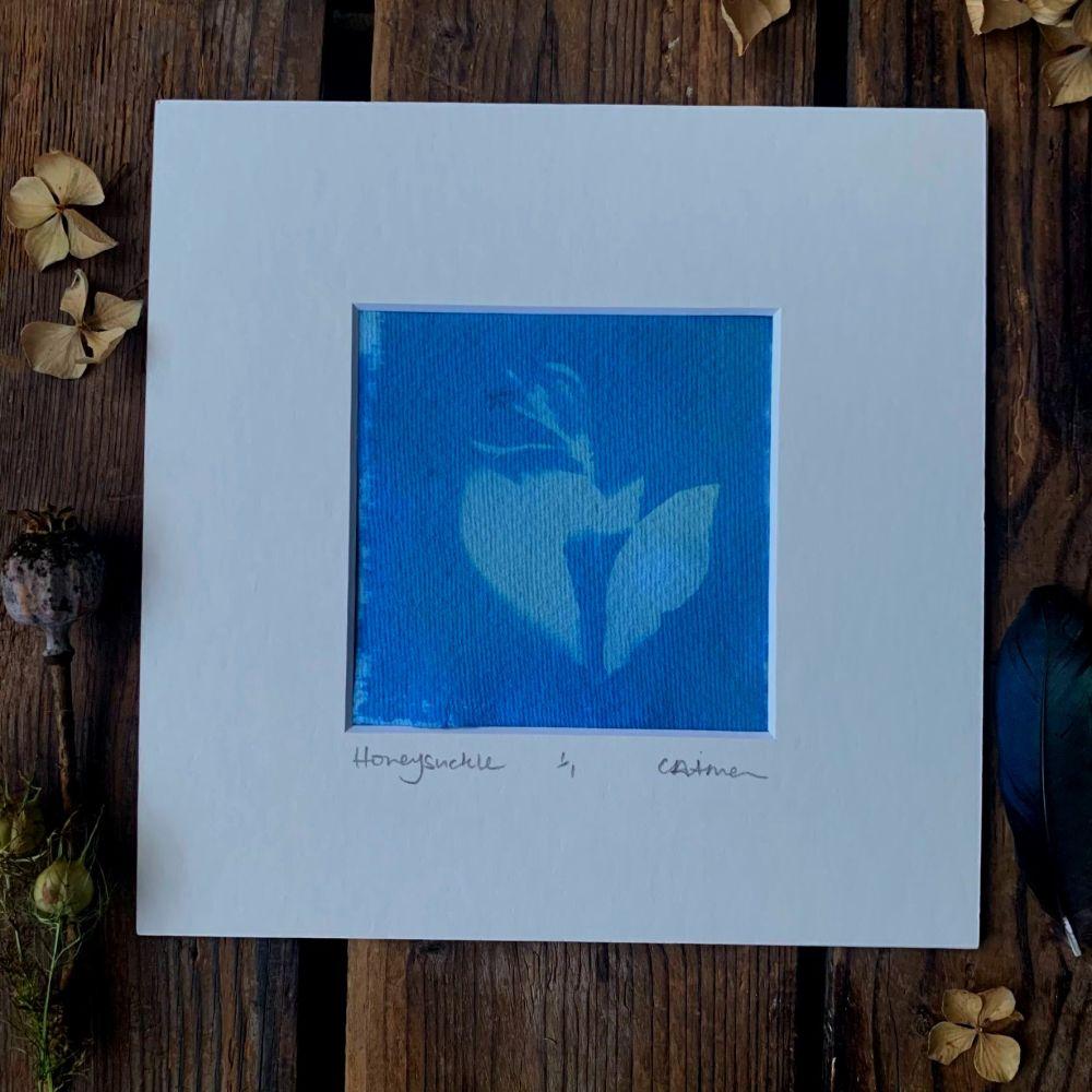 Honeysuckle blossom Cyanotype original print