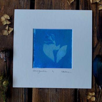 Small Honeysuckle blossom Cyanotype original print