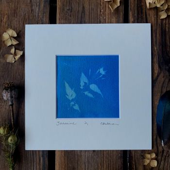 Small Jasmine Blossom Cyanotype original print