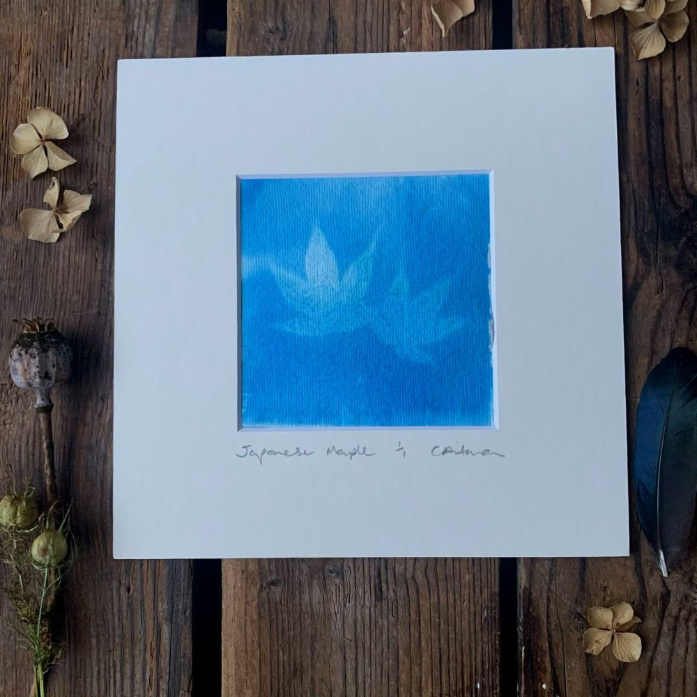 Maple leaf  Cyanotype original print