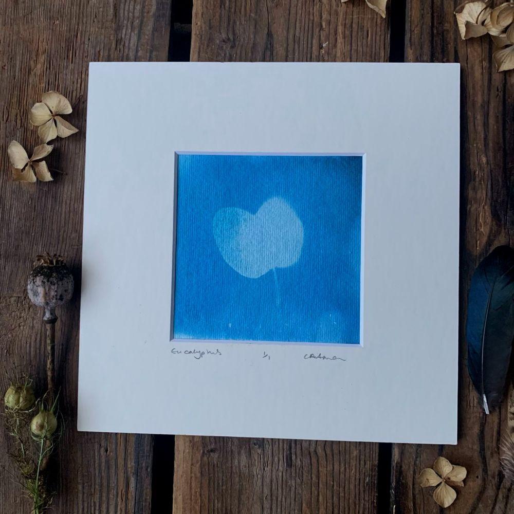 Small Eucalyptus Cyanotype original print