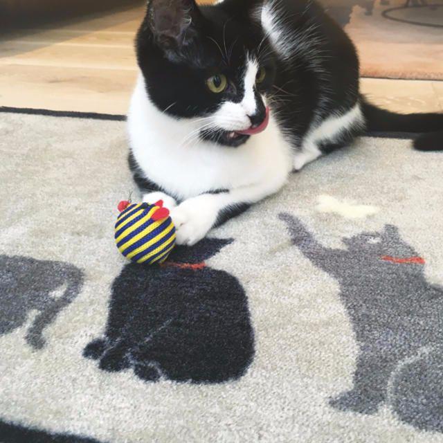 Purr-fect Cat Mats
