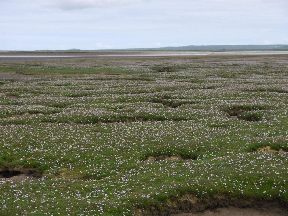 salt marsh 2