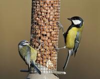 Bird seed & accessories