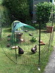 Omlet's New Chicken Fencing Kit!