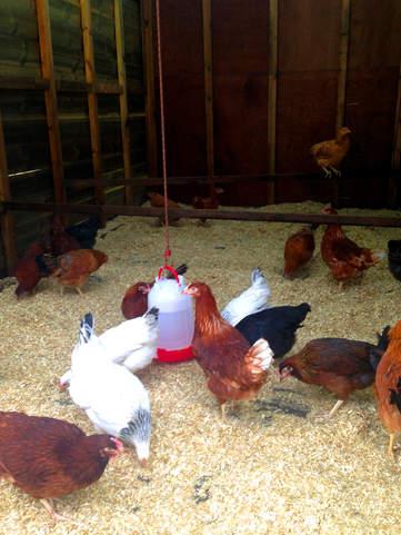 farmyard 1