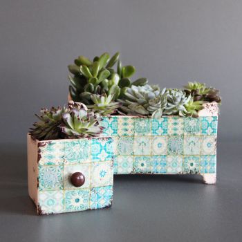 Succulents planter set