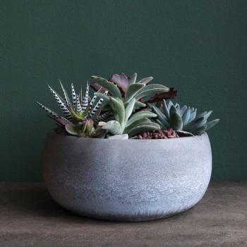 P. Succulent Bowl