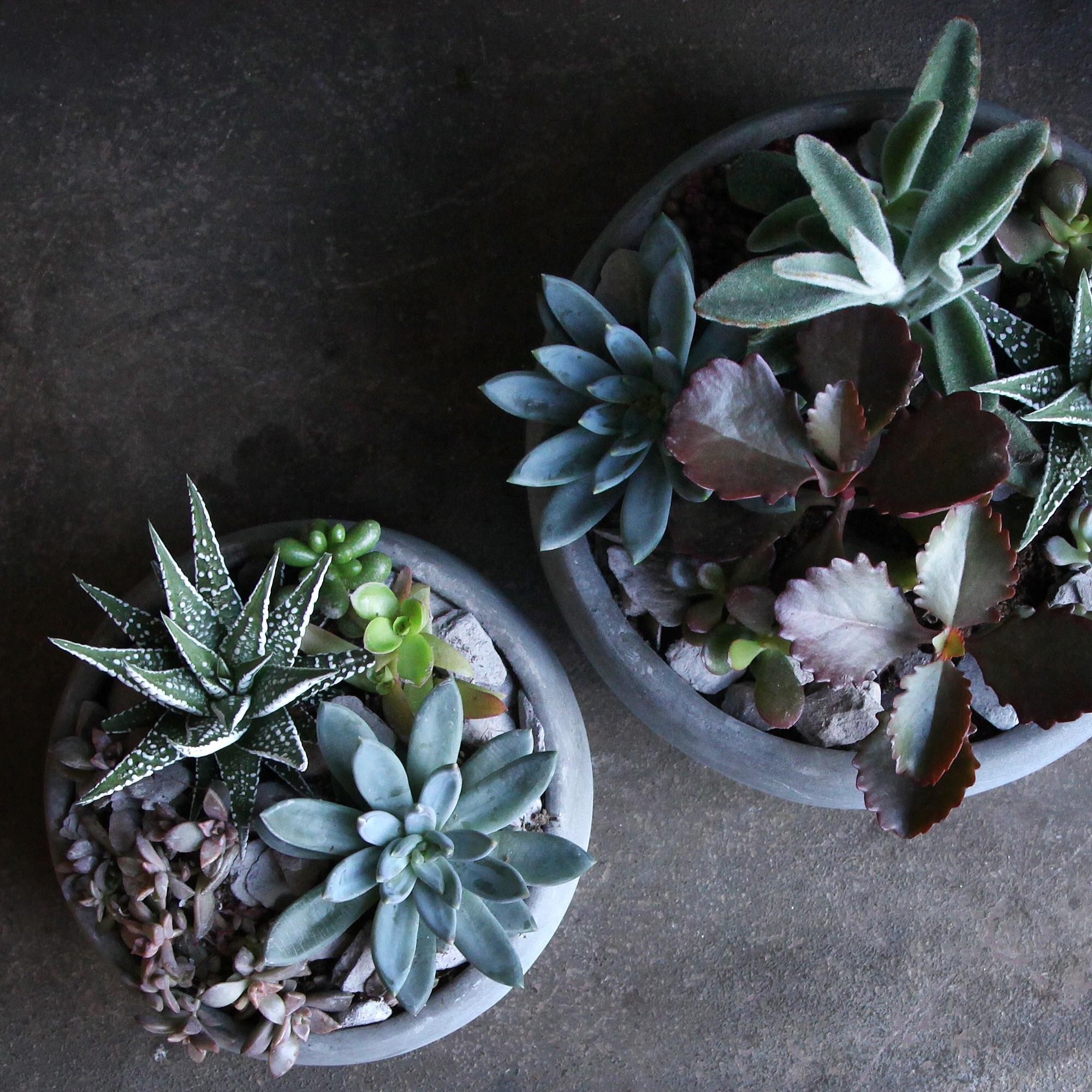 Grey Succulent Bowls (top)