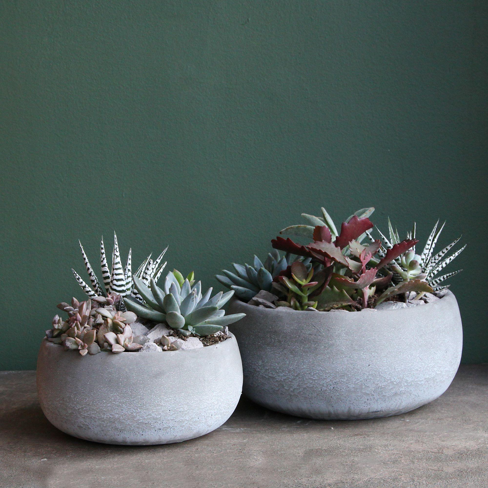 Grey Succulent Bowls (pair)