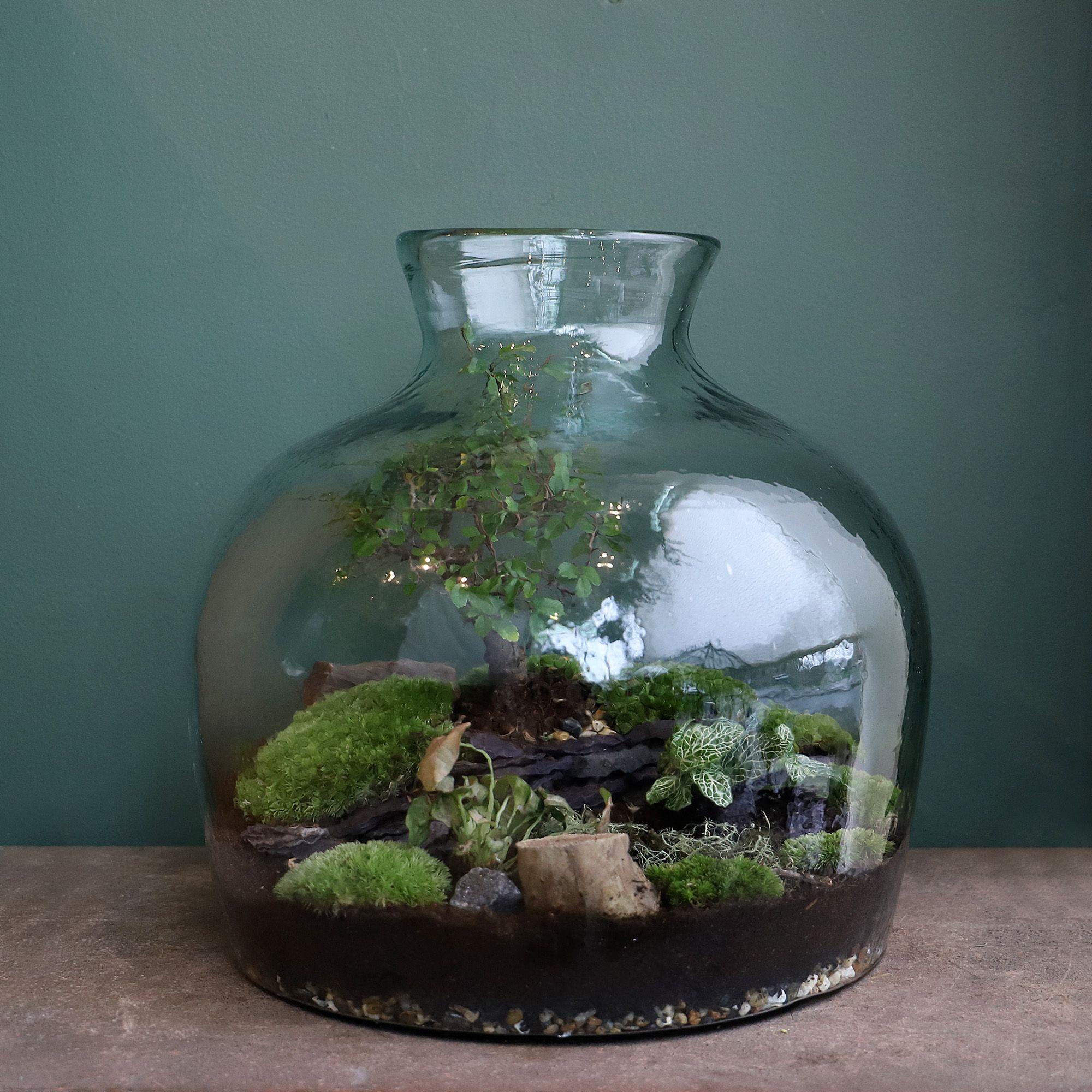 P. Bonsai Terrarium