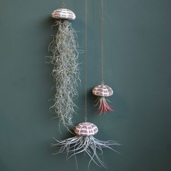 P. Hanging Air Plants