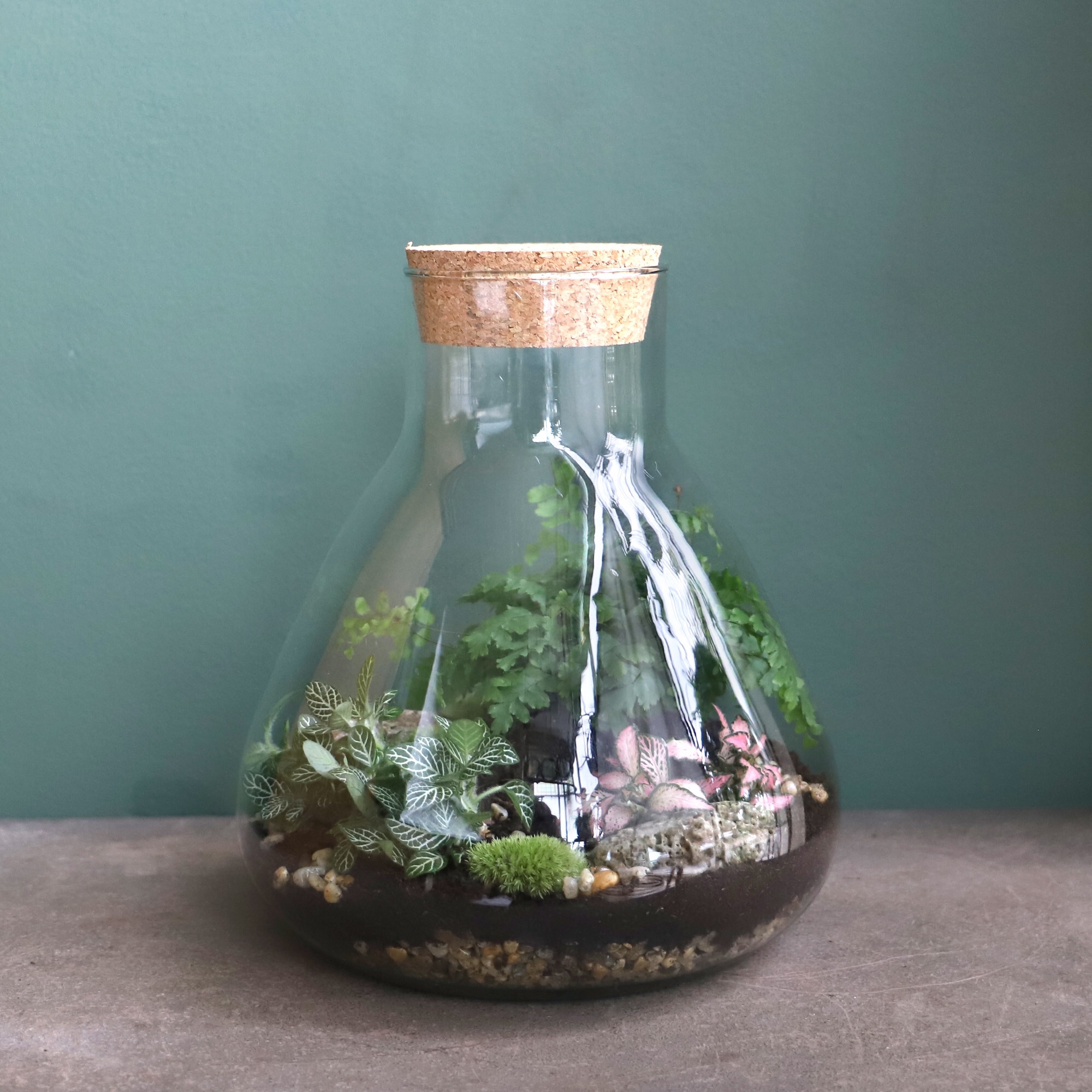 p. Closed Terrarium