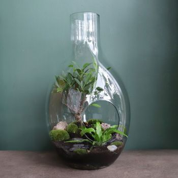Bonsai Terrarium Workshop - dates coming soon!