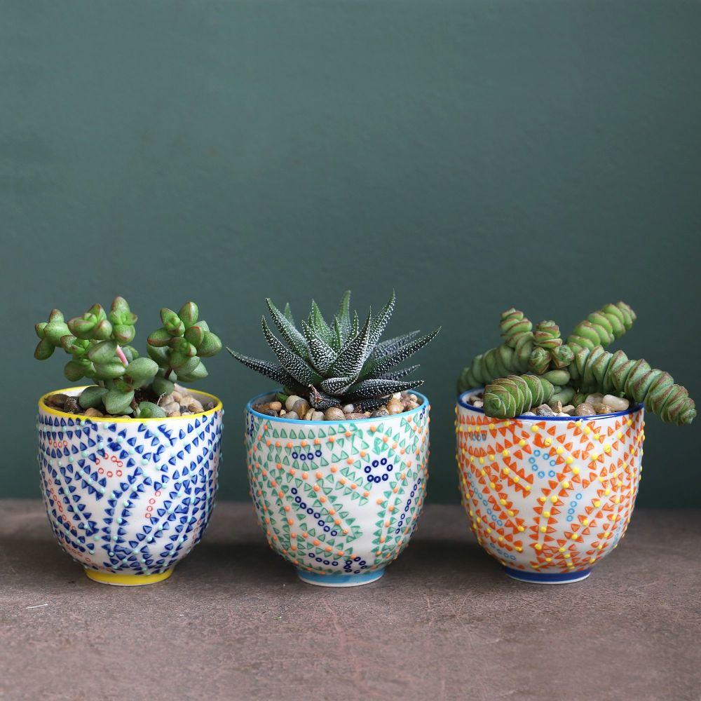 Colourful Succulent Set