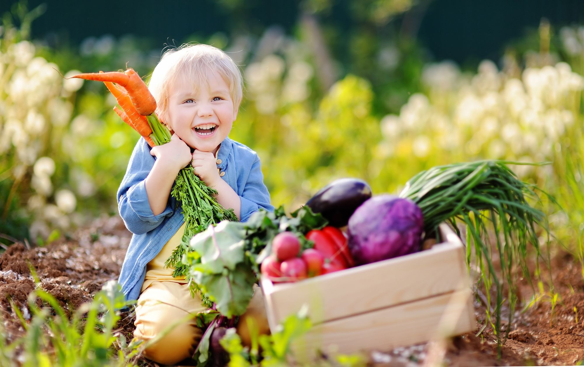 Cute-little-boy-holding-a-bunch-of-fresh-organic-carrots-in-domestic-garden