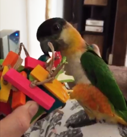 cage monted bird toys -skittle