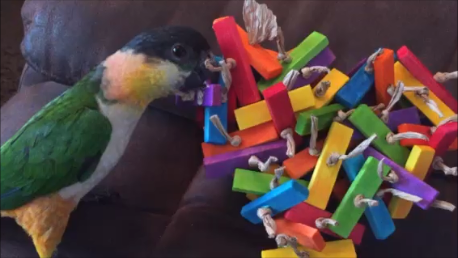 cage mounted toys for light shredders UK