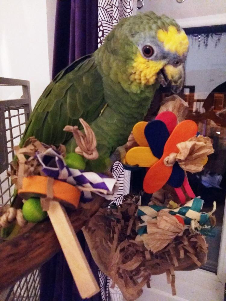 shredding foot toys-stan