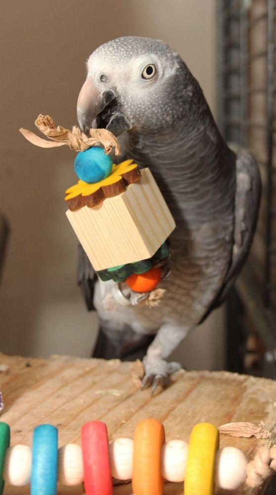 parrot foot toys-ash