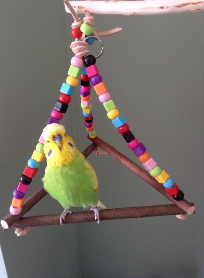 budgie swings made to any size-uk-billy