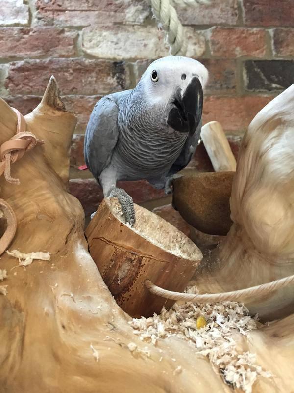 The Ole Senior Kabob Parrot Toy UK