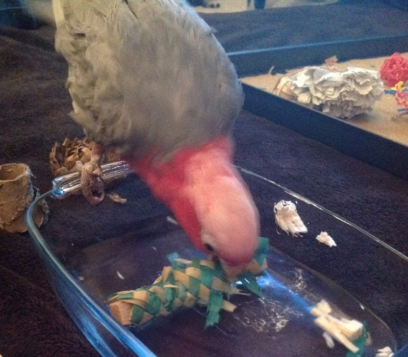 shredding foot toys for parrots uk-kiwi