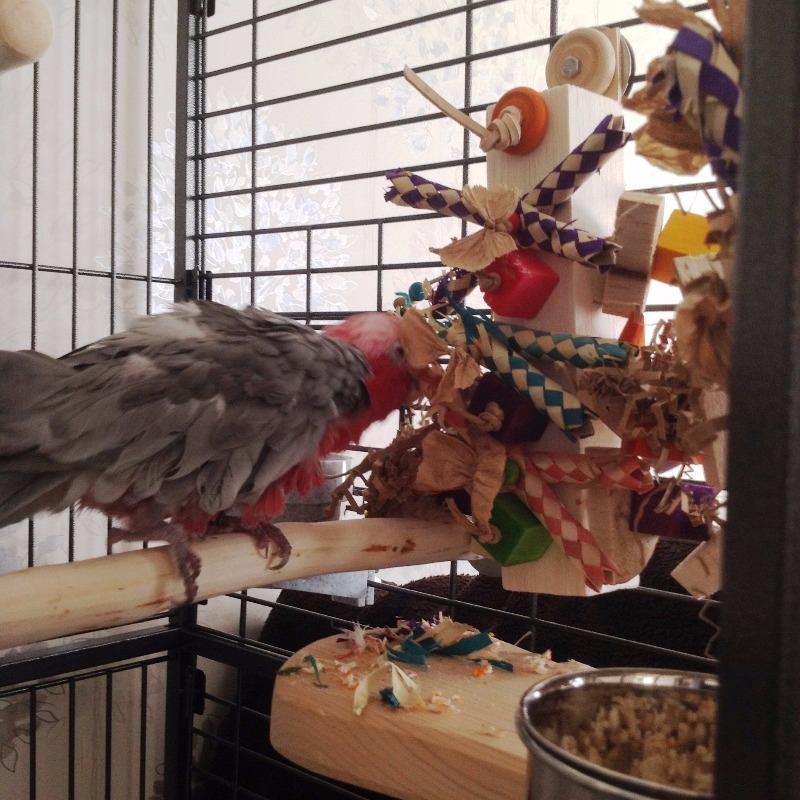 bespoke parrot shredding toys