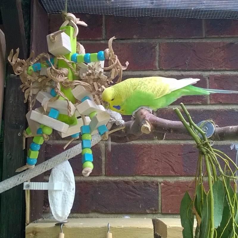 safe budgie toys uk-izzy